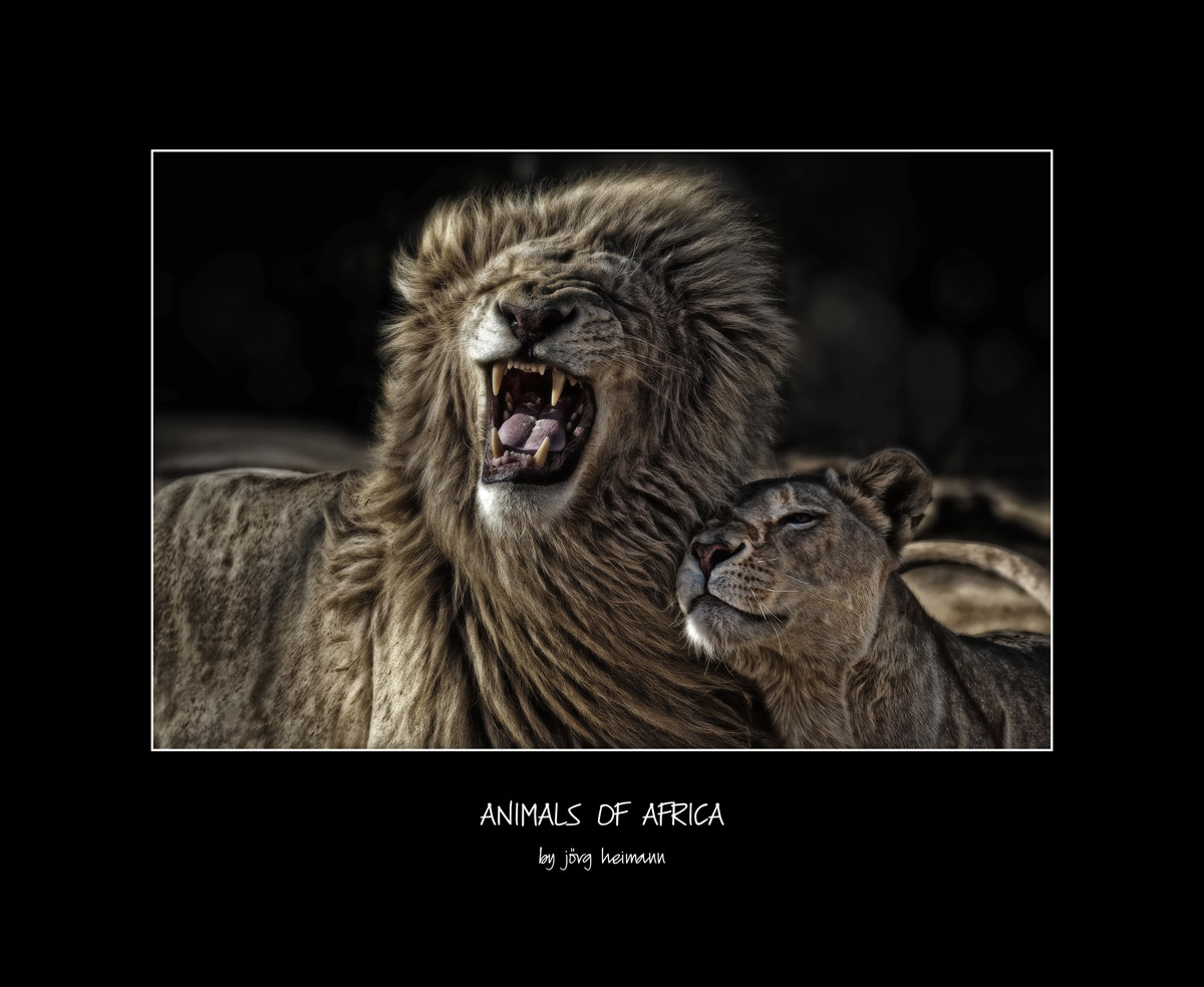 Animals-of-Africa 02