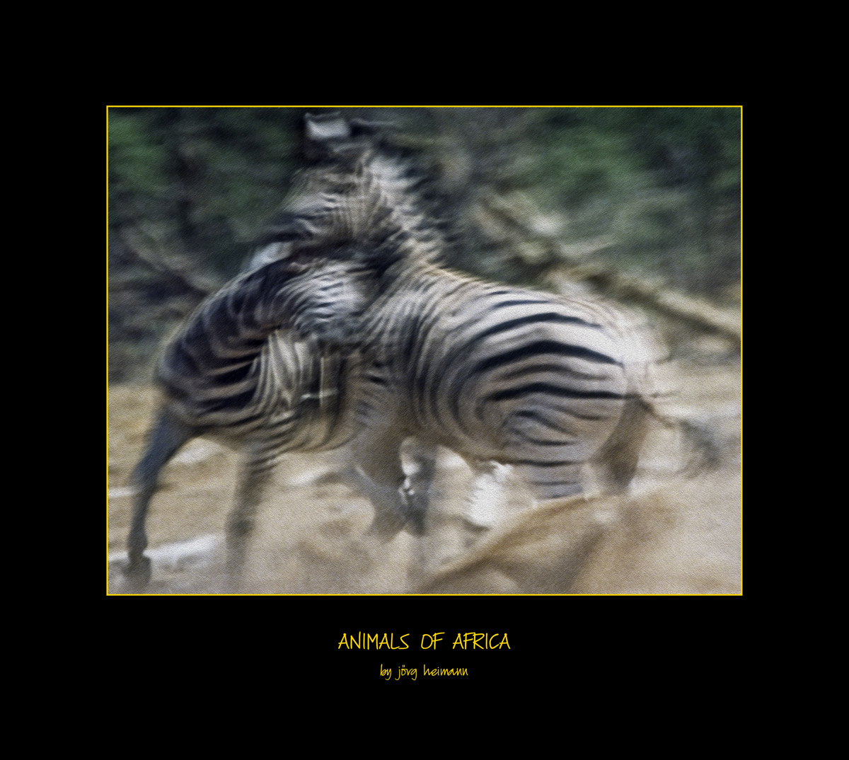 Animals-of-Africa 04