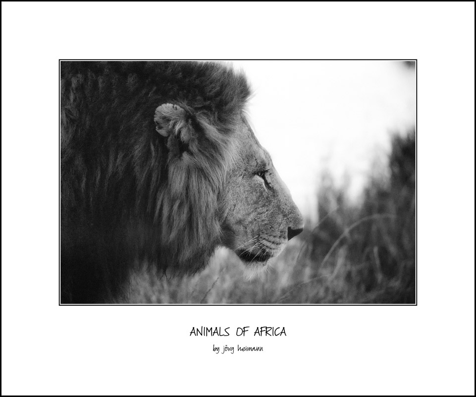 Animals-of-Africa 14