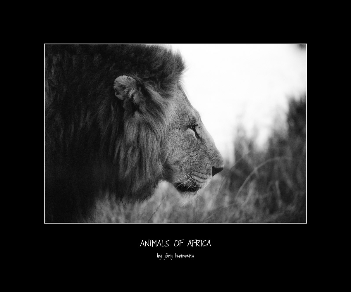 Animals-of-Africa 03