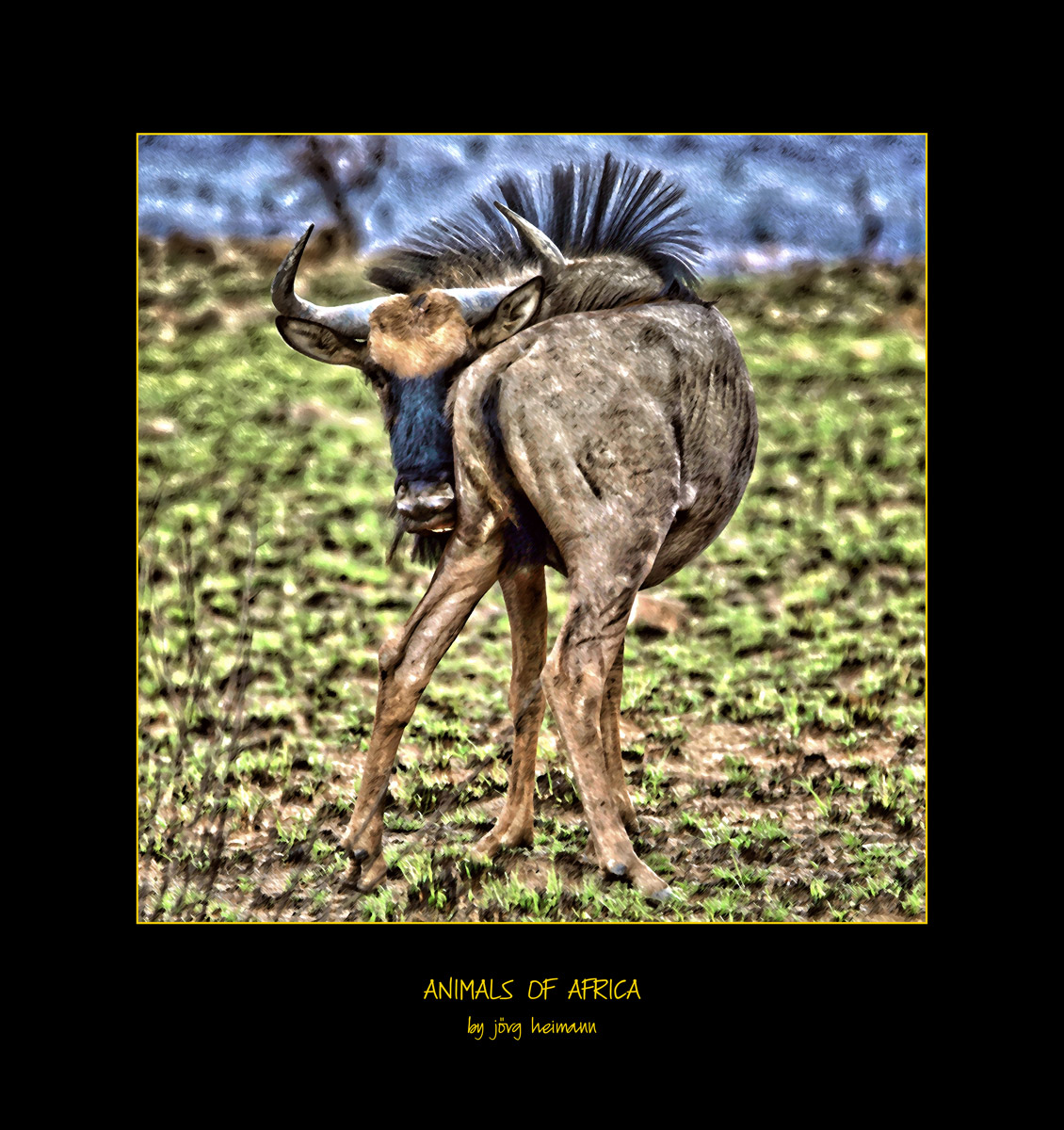 Animals-of-Africa 07