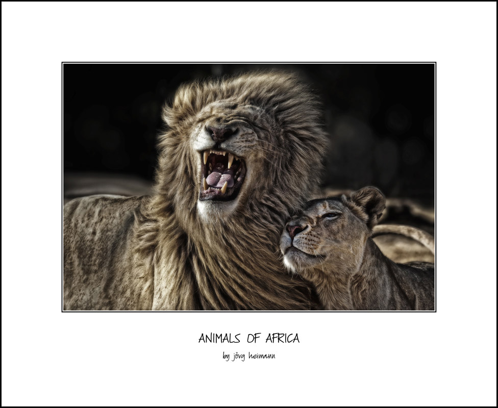 Animals-of-Africa 13
