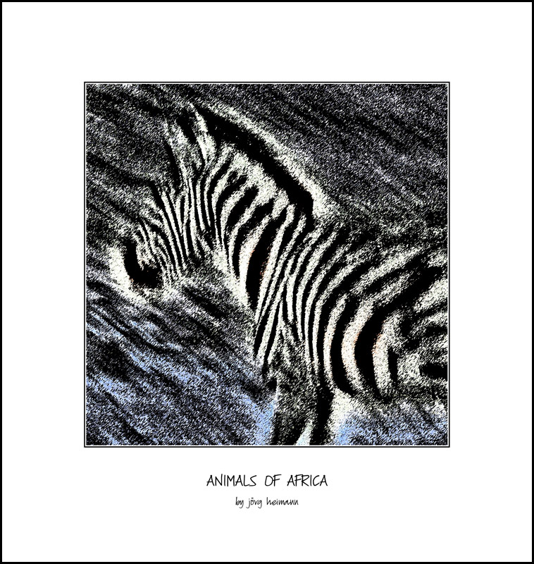 Animals-of-Africa 17